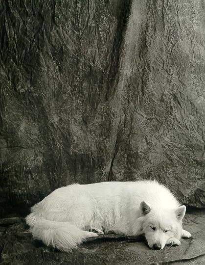 http://www.looknseephoto.com/misc/tundra/tundrasleep.jpg